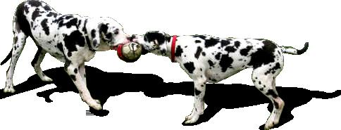 Dog Playing Png